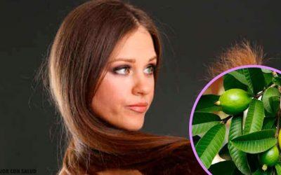 Hojas de guayaba para tratar el cabello dañado